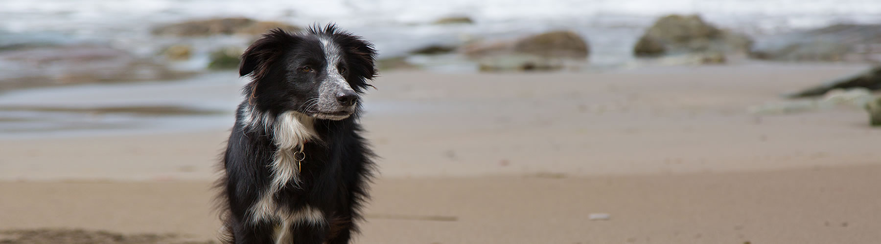 Dog Friendly Beaches South Devon