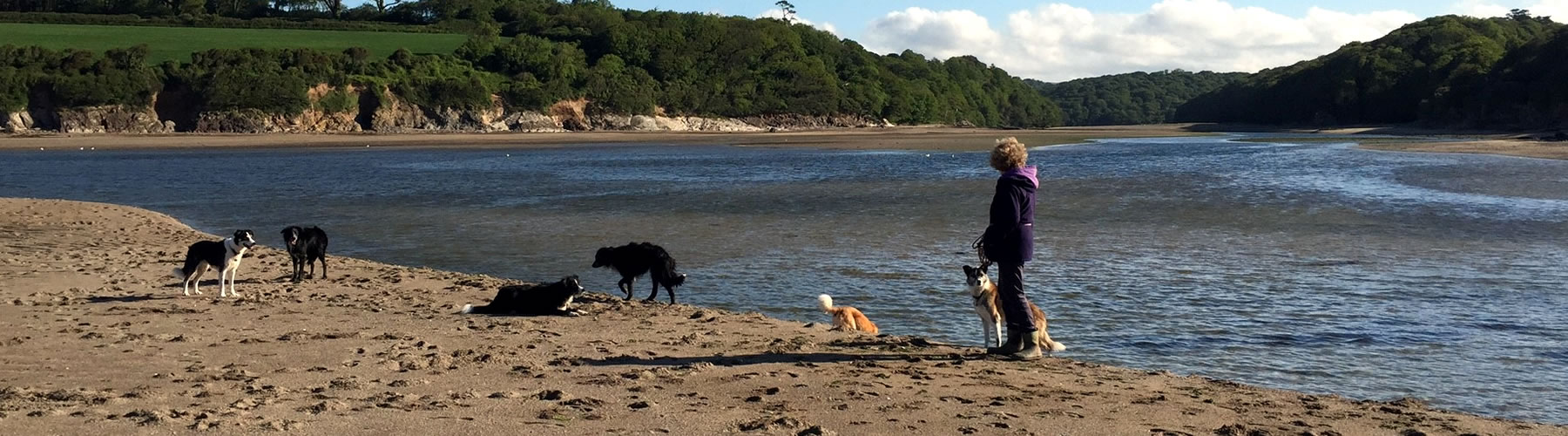 Dogs on Devon Beach