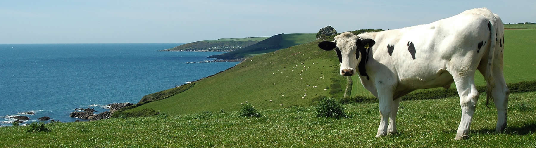 Holiday Cottages on ther South Devon Coast